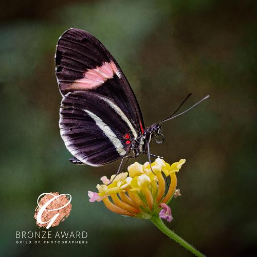 Bronze Award, Deborah Longmore Photography