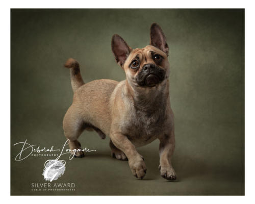 Pet Photographer Birmingham