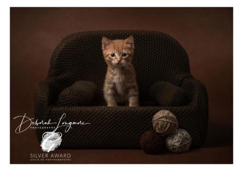 Pet Photographer Tamworth