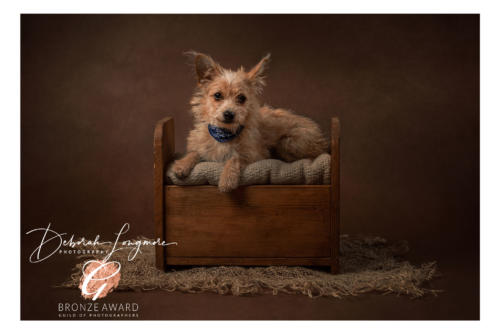 Pet Photographer Tamworth