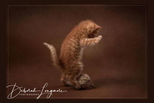 Pet Photography Birmingham