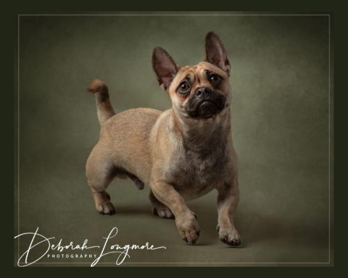 Pet Photography Tamworth